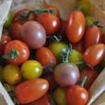 Wo bekommt man gentechnikfreies Saatgut ohne Monsanto & Co?